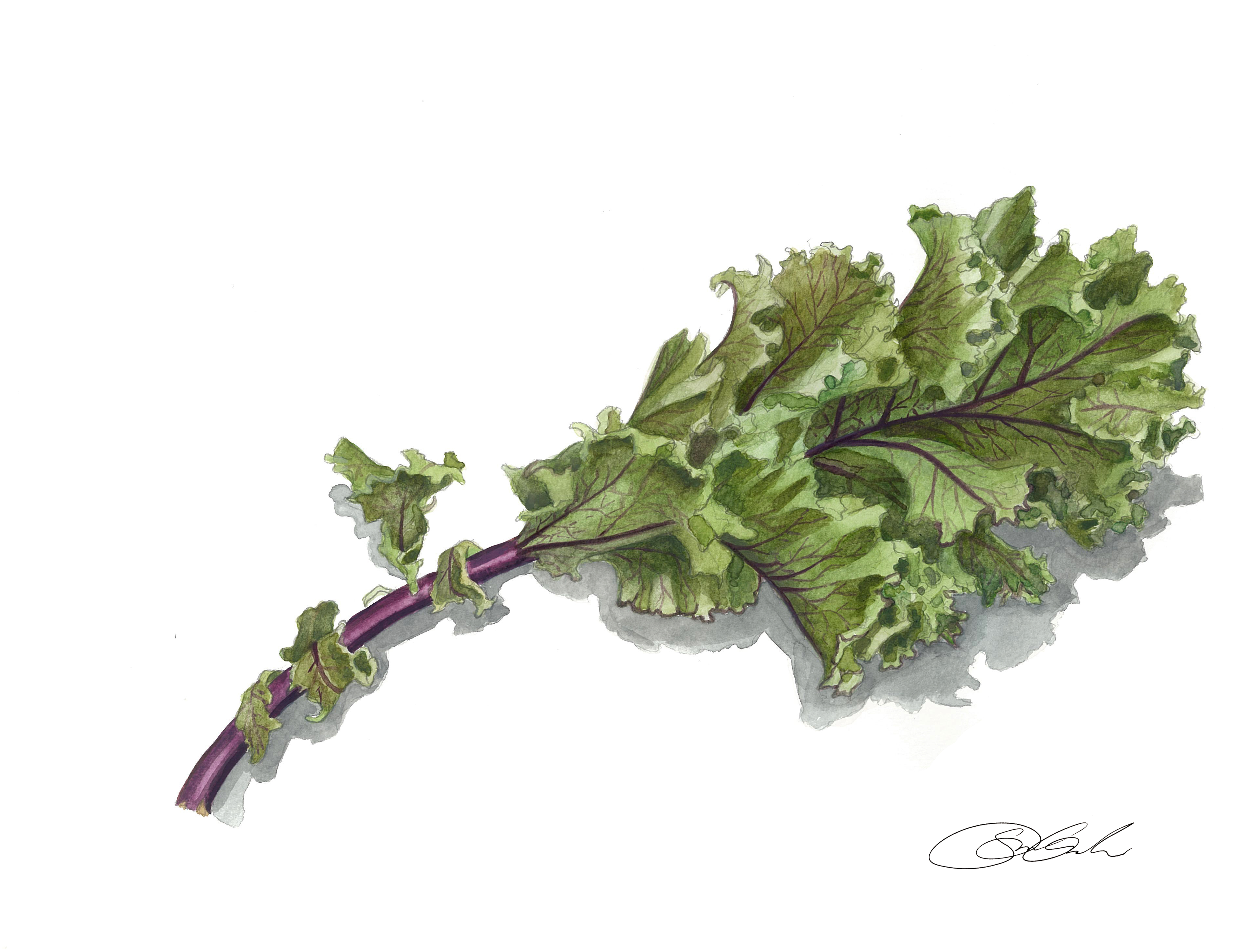 Kale Scan