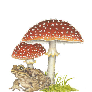 Forest Magic Toad