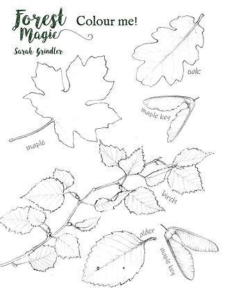 Leaf Colouring.jpg