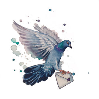 pigeon carrier .jpg
