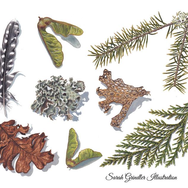 Forest Studdies