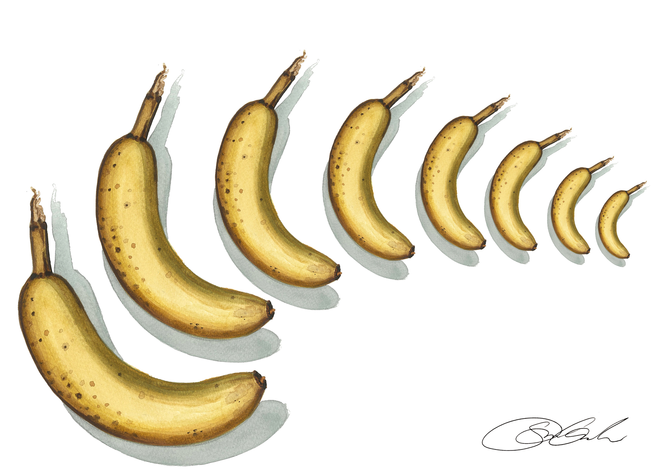 Banana Movement