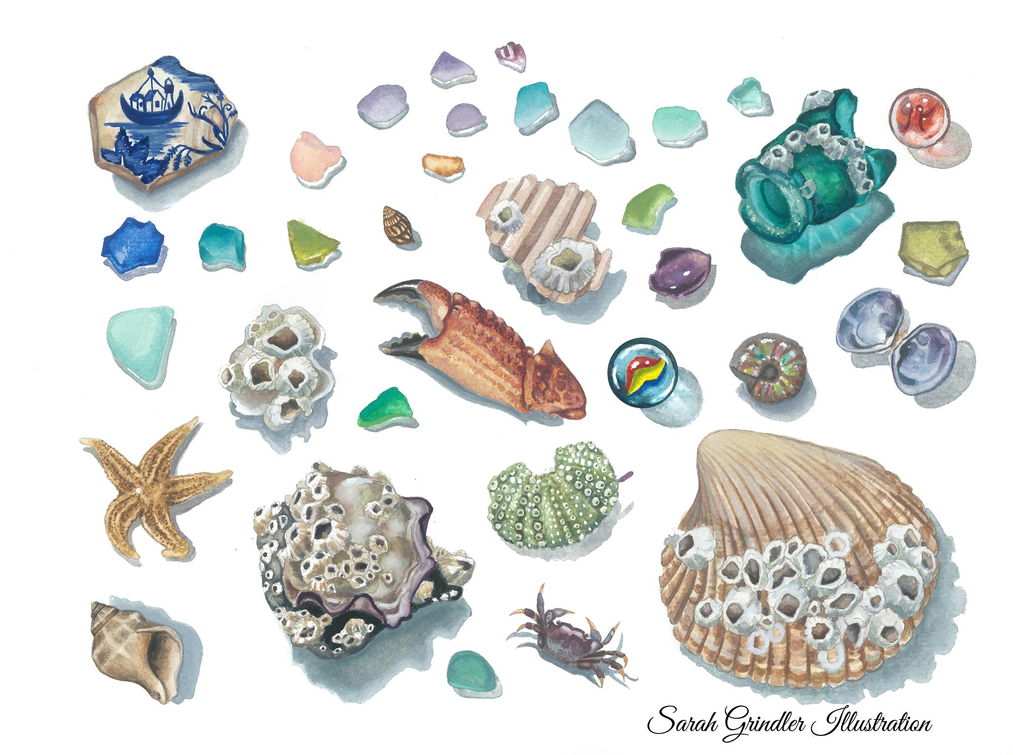 Beach Studies
