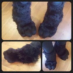 Chibi Dragon Claw Sockpaws