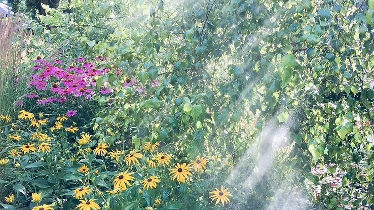 wildwood misty gardenIMG_1099.jpg