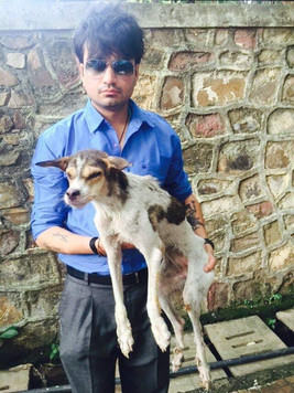 Rescued Stray Dog