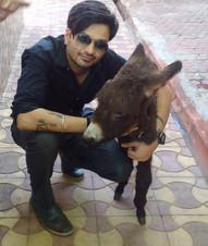Rescued Donkey Calf