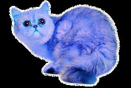 dayday key's cat