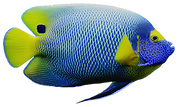 Fish%20Cut-Out_edited.png