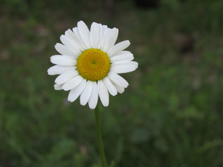 Vivre le printemps en sophro-balade !!