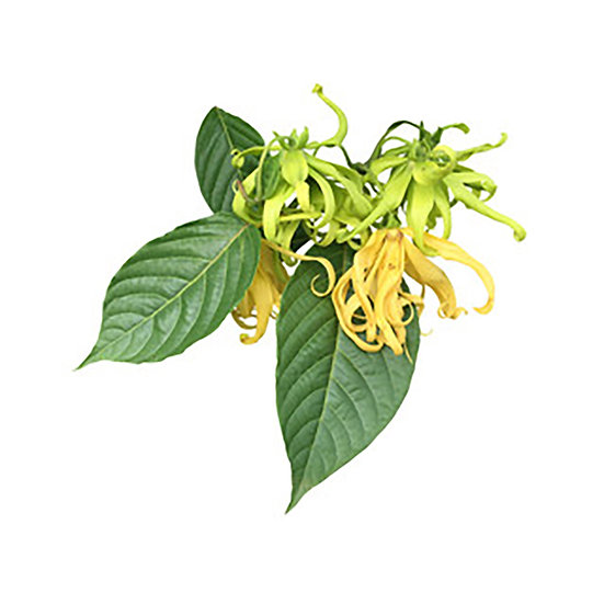 Eau florale de ylang-ylang
