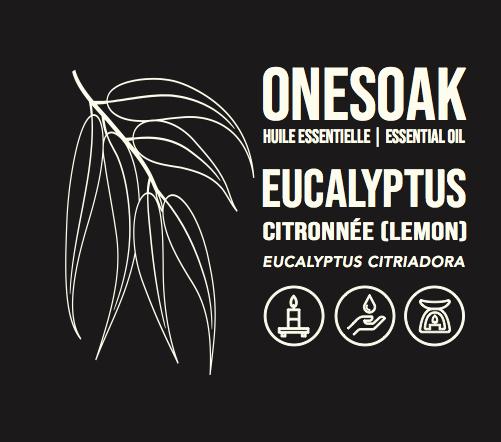 Eucalyptus citronnée