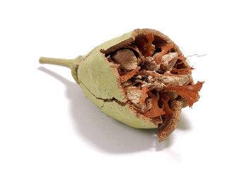 Huile végétale de baobab | Biologique