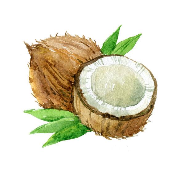 Fragrance naturelle | Noix de coco