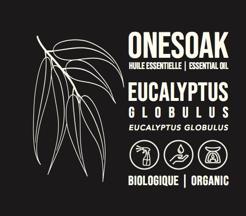 Eucalyptus globulus | Biologique