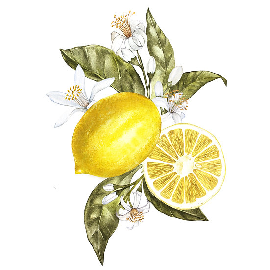 Fragrance naturelle | Bergamote