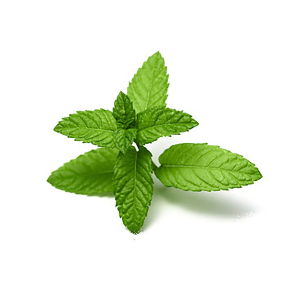 Saveur naturelle | Menthe verte
