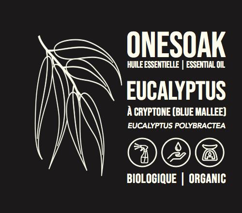 Eucalyptus à crypton | Biologique