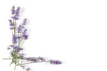 Eau florale de lavande