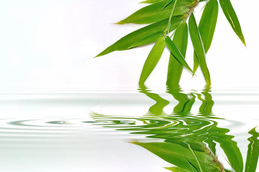 Fragrance | Bambou