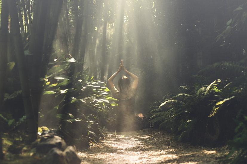 Fragrance | Forêt mystérieuse