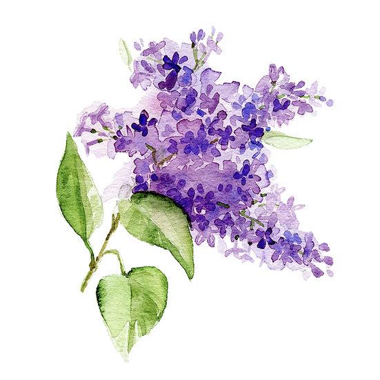Fragrance naturelle | Lilas