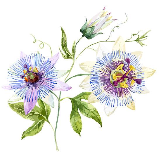 Fragrance naturelle   Fleur de la passion