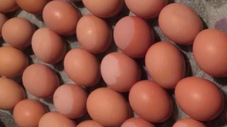 eggs_edited.jpg