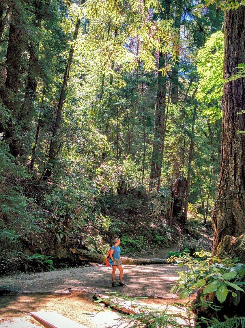 Fall Creek Hike, Felton, CA