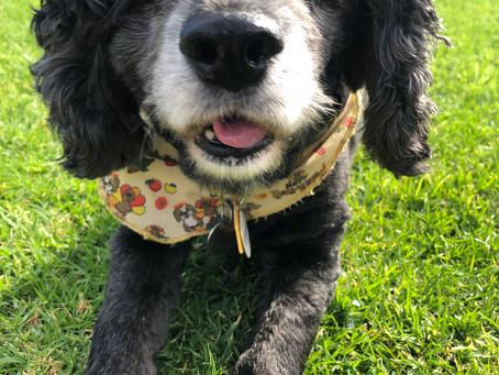 Belle - beauty and best friend