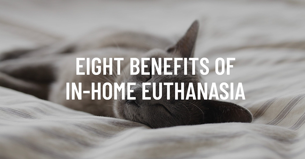 benefits of in-home euthanasia