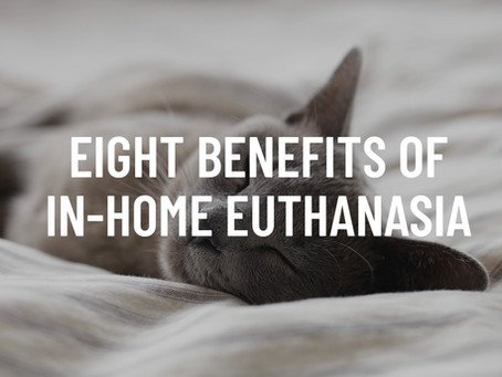 Eight Benefits of In-Home Euthanasia