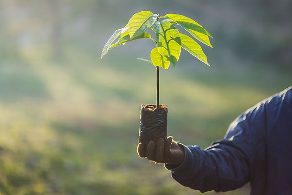 Plant a tree in honor of your pet. San Diego Pet Cremation