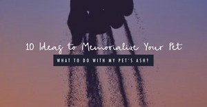 How to Memorialize Your Pet after Aquamation