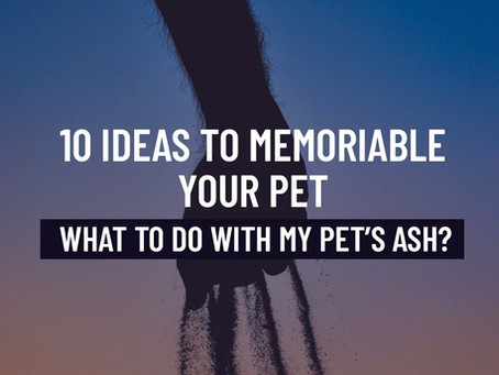 10 Ways to Memorialize Your Pet