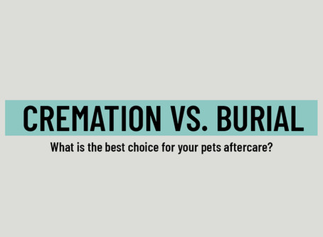 Cremation vs. Burial for Your Pets Aftercare