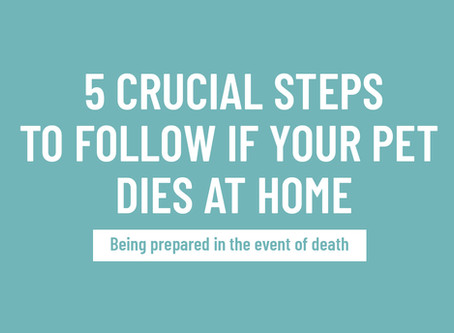 Five Crucial Steps to Follow If Your Pet Dies at Home