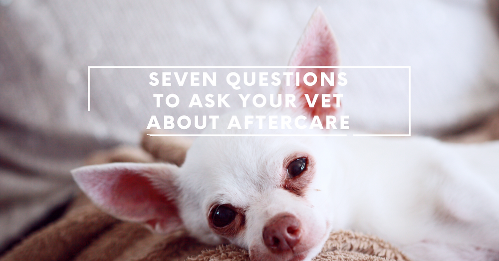 Questions to Ask Your Vet About Pet Aftercare