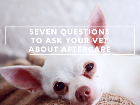 Seven Questions to Ask Your Vet About Aftercare