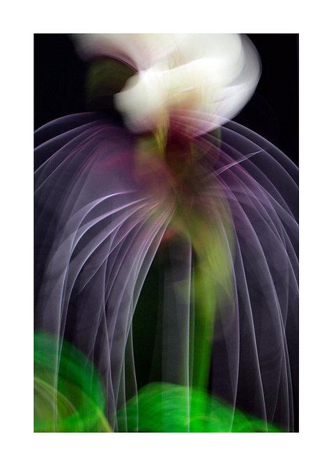 HYPNOTIC FLOWERS 4