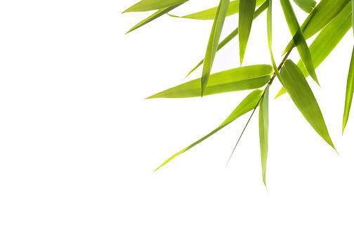 bg-bamboo.jpg