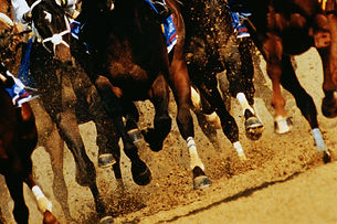 Low angle photo of race horses' legs as they break from the starting gate.