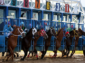 A photo of race horses breaking from the starting gate.