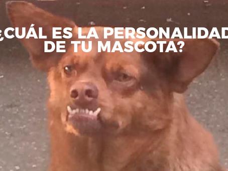 """""""15 expresiones para saber la personalidad de tu perro"""""""