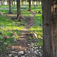 שקט בין העצים 2