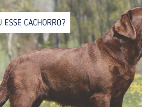 Segurança animal: Dicas para proteger seu amigo de quatro patas