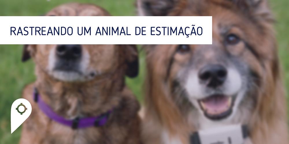 Como rastrear um animal de estimação?