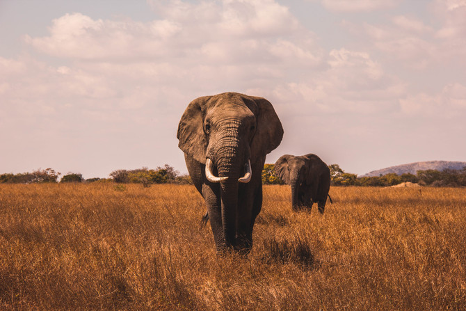 How publicity is like a Safari - what clients need to understand