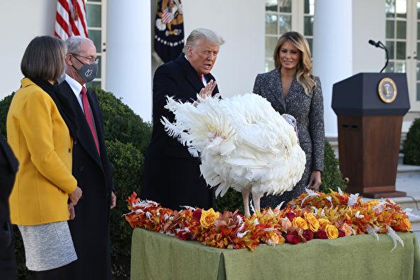 2020年11月24日,白宮舉行感恩節豁免火雞儀式。(Chip Somodevilla/Getty Images)