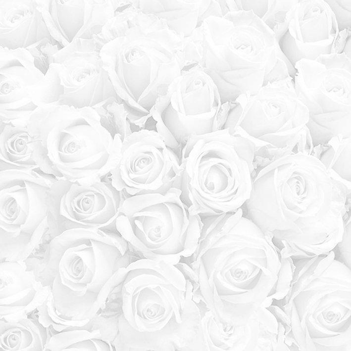 rose backdrop.jpg